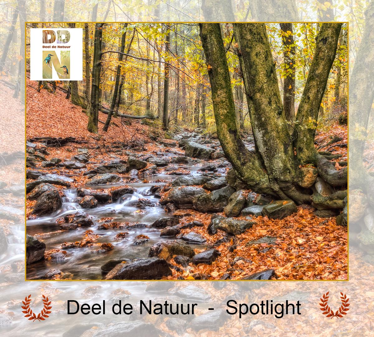 DDN Spotlight FB 22-10-2021