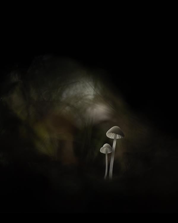 Mycena tunnel ddn