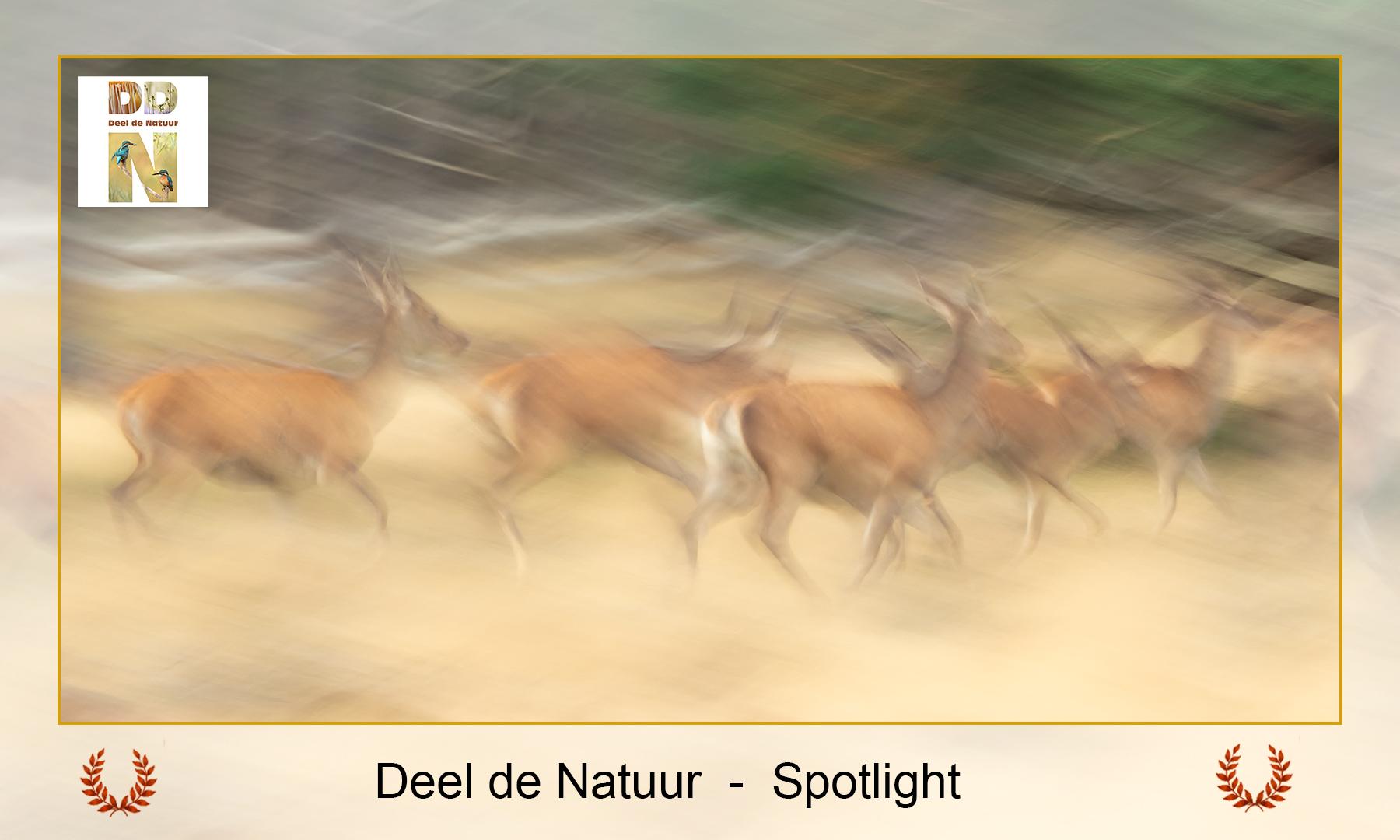 DDN Spotlight FB 25-10-2021