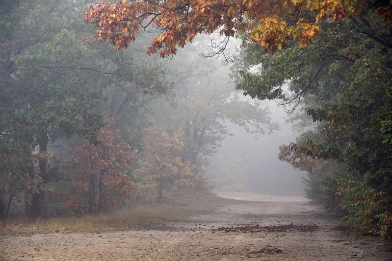 Doorkijkje in de mist....